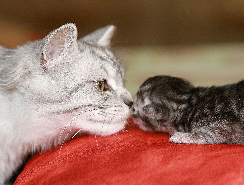 Как подружить взрослого животного с малышом