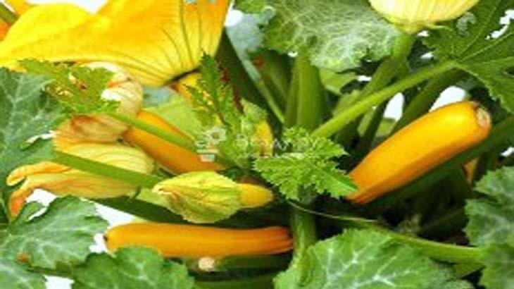 Как вырастить рассаду огурцов, кабачков и тыквы
