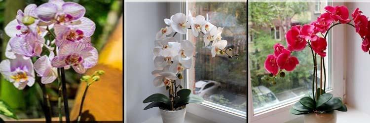 Орхидеи выращивание и уход