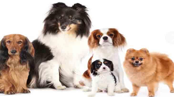 Мелкие породы собак: Топ-12 лучших пород собак для содержания в квартире